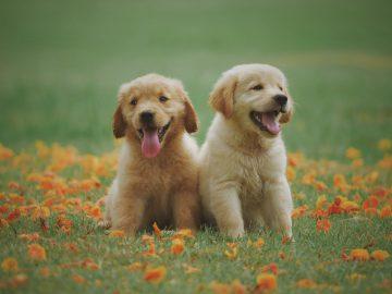 farmfood-puppies